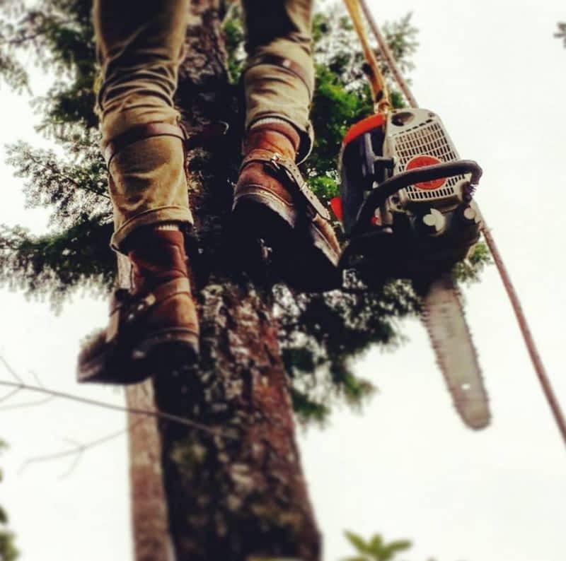photo Climbing Fox Tree & Hedge Service