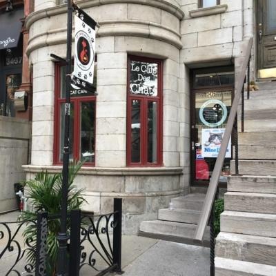 Le Café Des Chats - 514-289-2428