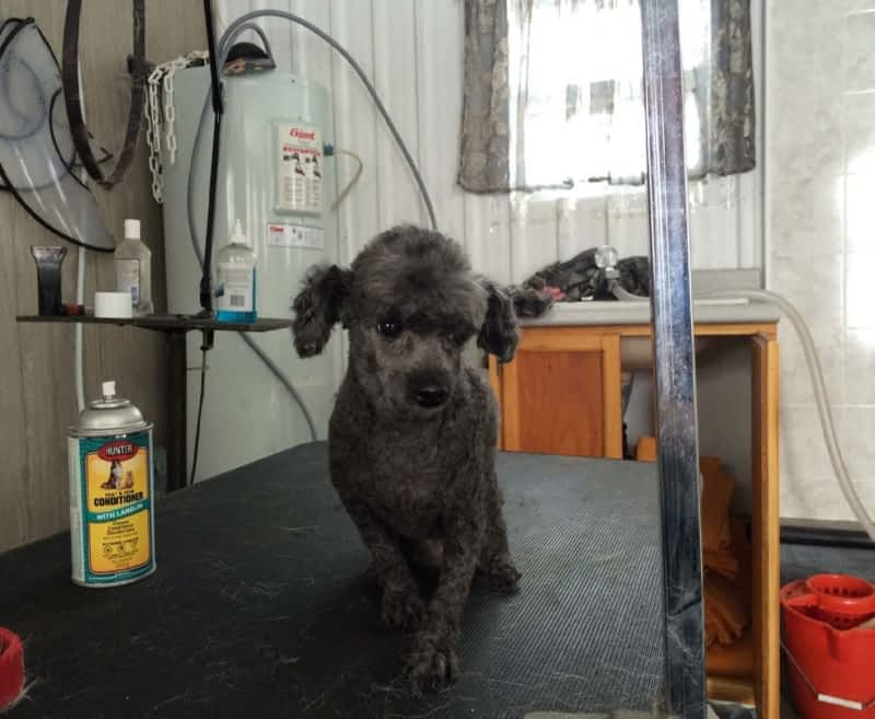 Dog Grooming Prices Mississauga