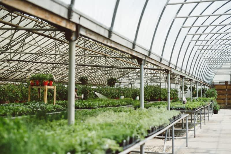 photo Golden Acre Garden Centre