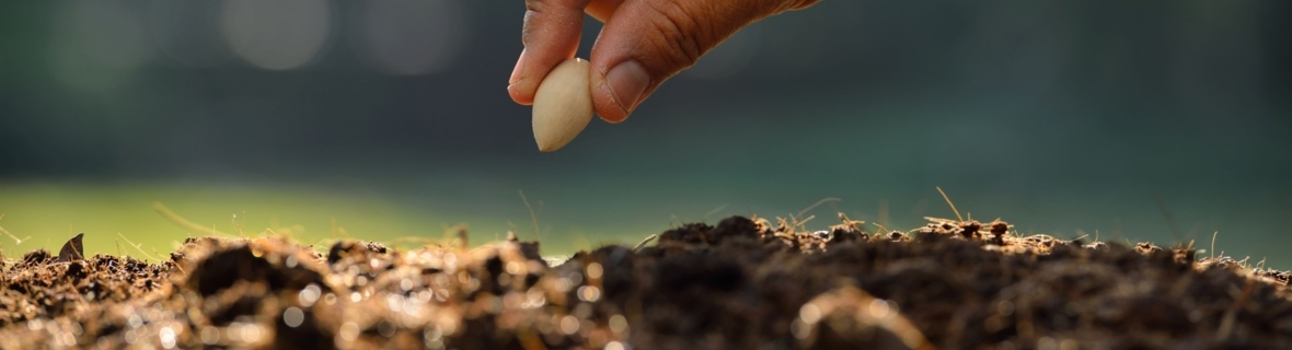 Get growing: Where to find seeds and bulbs in Calgary