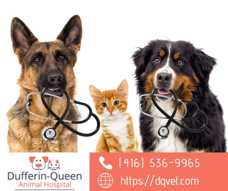 photo Dufferin Queen Animal Hospital