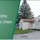 Hôpital Vétérinaire Saint-Constant - Vétérinaires - 450-632-8231