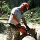 Labelle Tree Service Inc - Tree Service - 780-216-8733