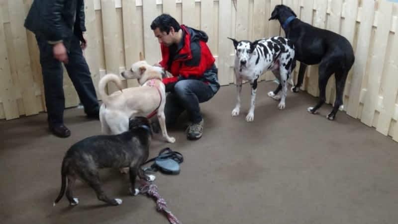 Dog Treadmill Training Edmonton