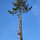 West Coast Tree & Excavation Services - Excavation Contractors