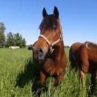 Centre d'Equitation Nouvelle-France - Horse Riding Centres