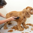 K-9 Clippers - Pet Grooming, Clipping & Washing