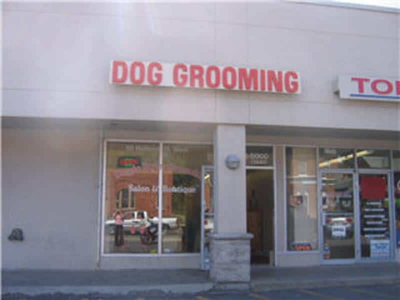 Doggie styles grooming salon boutique bradford on for 56 west boutique and salon