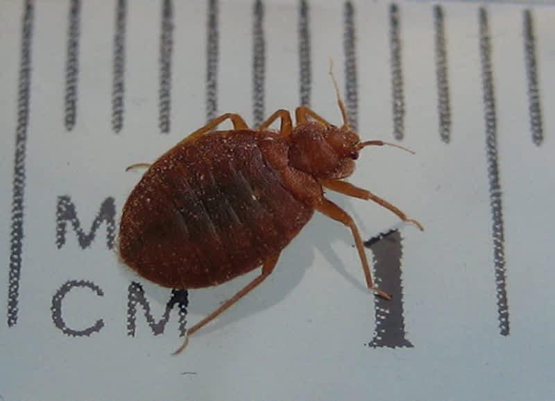 photo Bed Bug Exterminator Pro