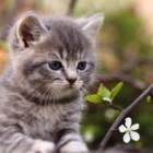 Cat Sitter Toronto - Pet Sitting Service - 647-360-2504