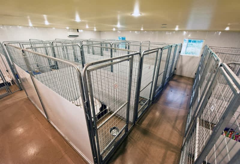 Dog Kennel Port Coquitlam