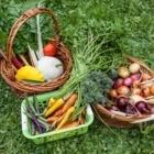 Semis Urbains - Garden Centres - 514-578-8900