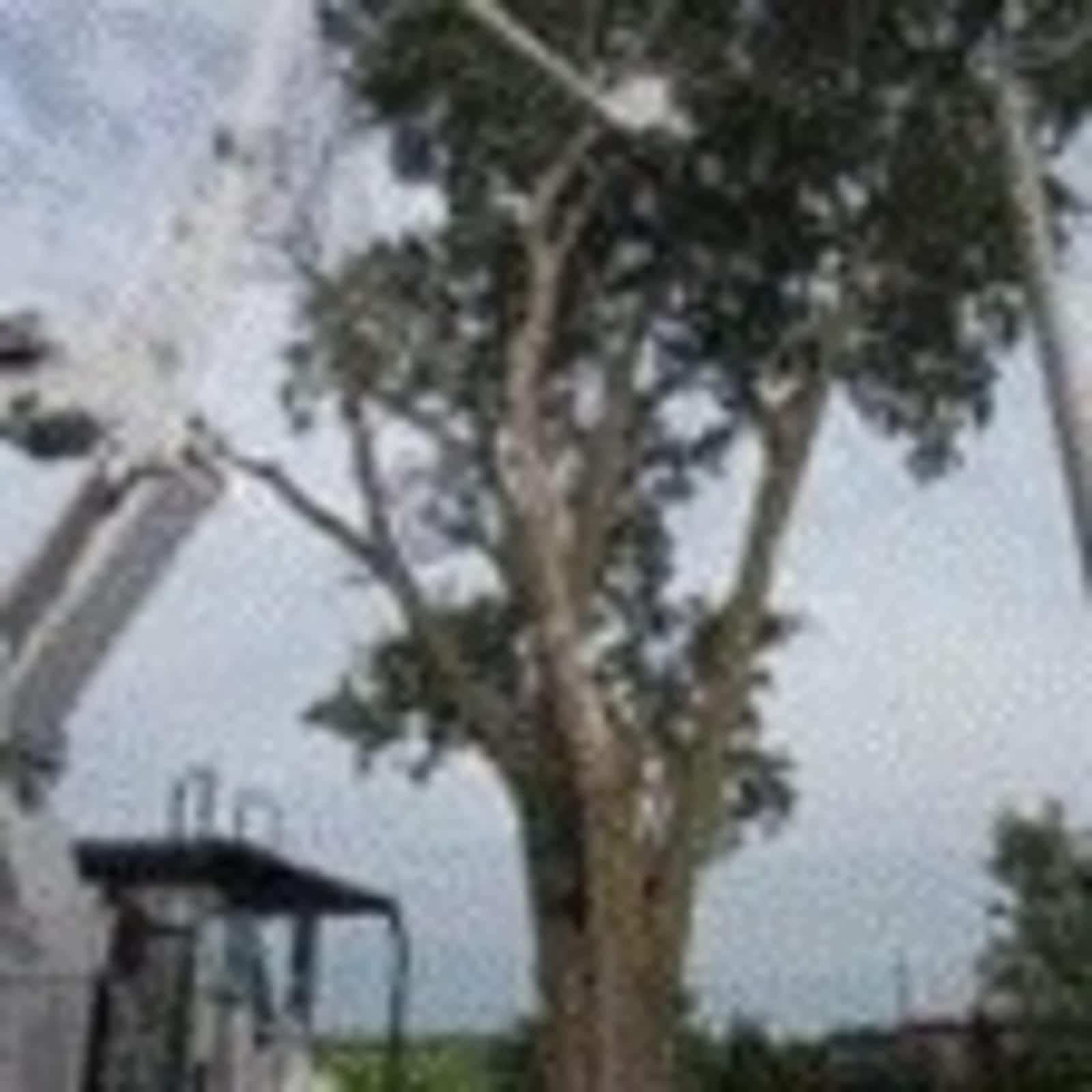 abattage arbre valleyfield