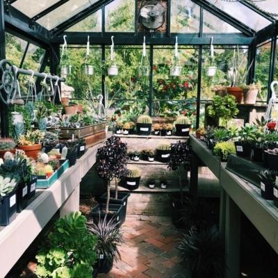 Southlands Nursery - Nurseries & Tree Growers - 604-261-6411
