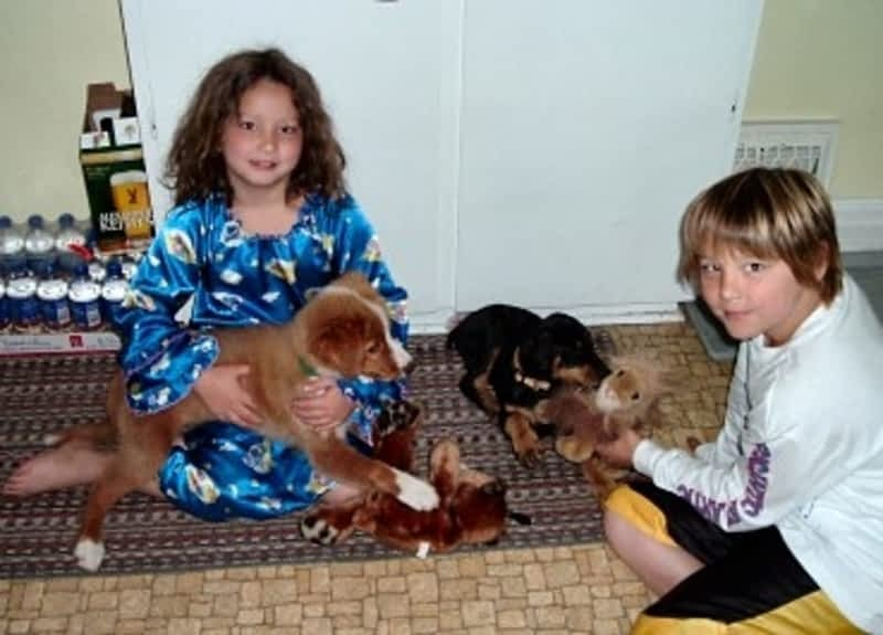 Kingston Road Dog Grooming
