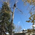 Limber Environmental Ltd - Tree Service
