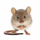 Huron Pest Control - Pest Control Services