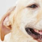 The Doggo's - Toilettage et tonte d'animaux domestiques