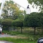 Branches Tree Service - Paysagistes et aménagement extérieur - 905-432-1422