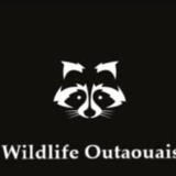 View Wildlife Outaouais's Cantley profile
