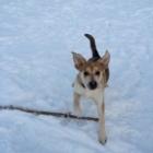 Le Rendez-Vous Canin - Pet Sitting Service - 819-328-8132