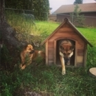 Dogsters Day Camp & In Home Boarding - Services pour animaux de compagnie - 250-212-7772