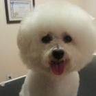 Bitu's Pet Services - Pet Grooming & K9 Aquafitness - Toilettage et tonte d'animaux domestiques