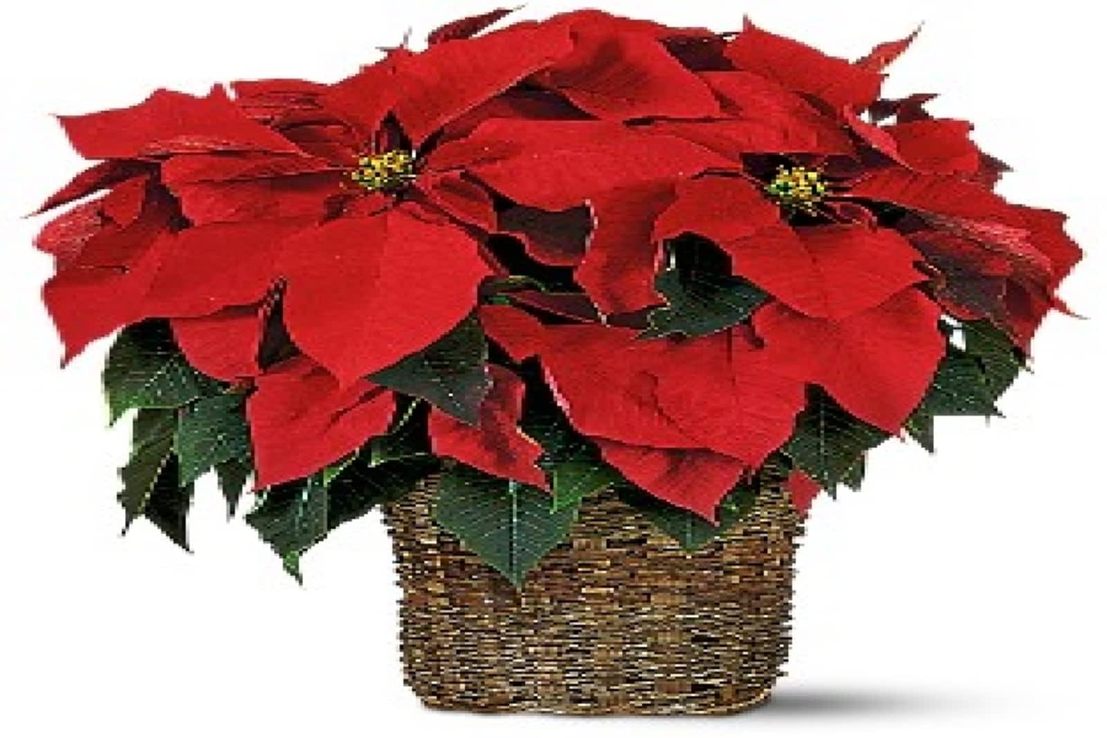 Mums Flowers Opening Hours 4665 Central Pky E Mississauga On