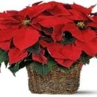 Mums Flowers - Florists & Flower Shops - 905-568-1777