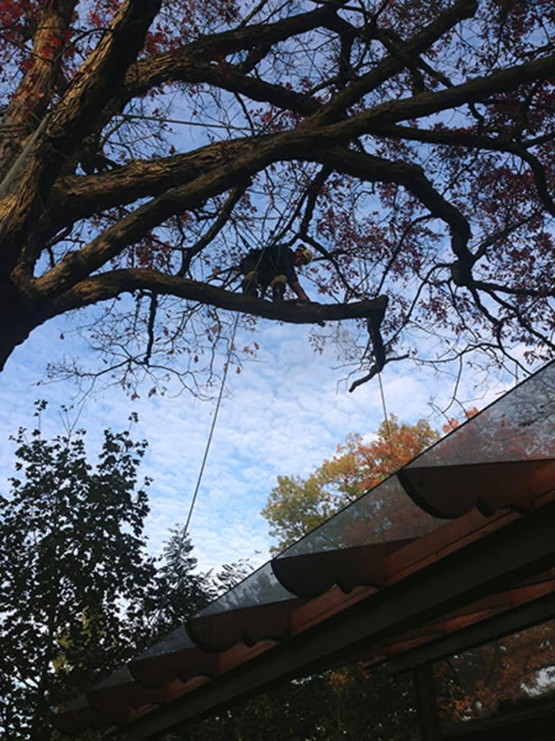 photo Towne Trees Inc