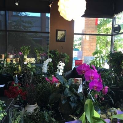 Lotus Flower Boutique - Fleuristes et magasins de fleurs