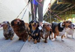 Pooch pals: Dog walking services in Toronto