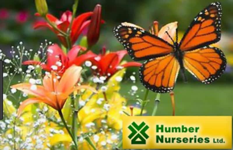 Humber Nurseries Ltd Brampton On 8386 50 Hwy Canpages