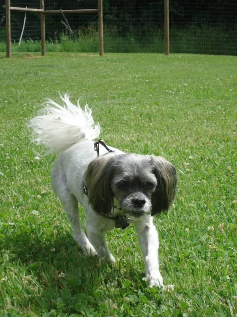Dog Grooming Cambie