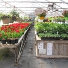 Beautiful Flowers Nursery - Nurseries & Tree Growers - 709-258-6868