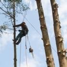 Jim's Tree Service - Tree Service
