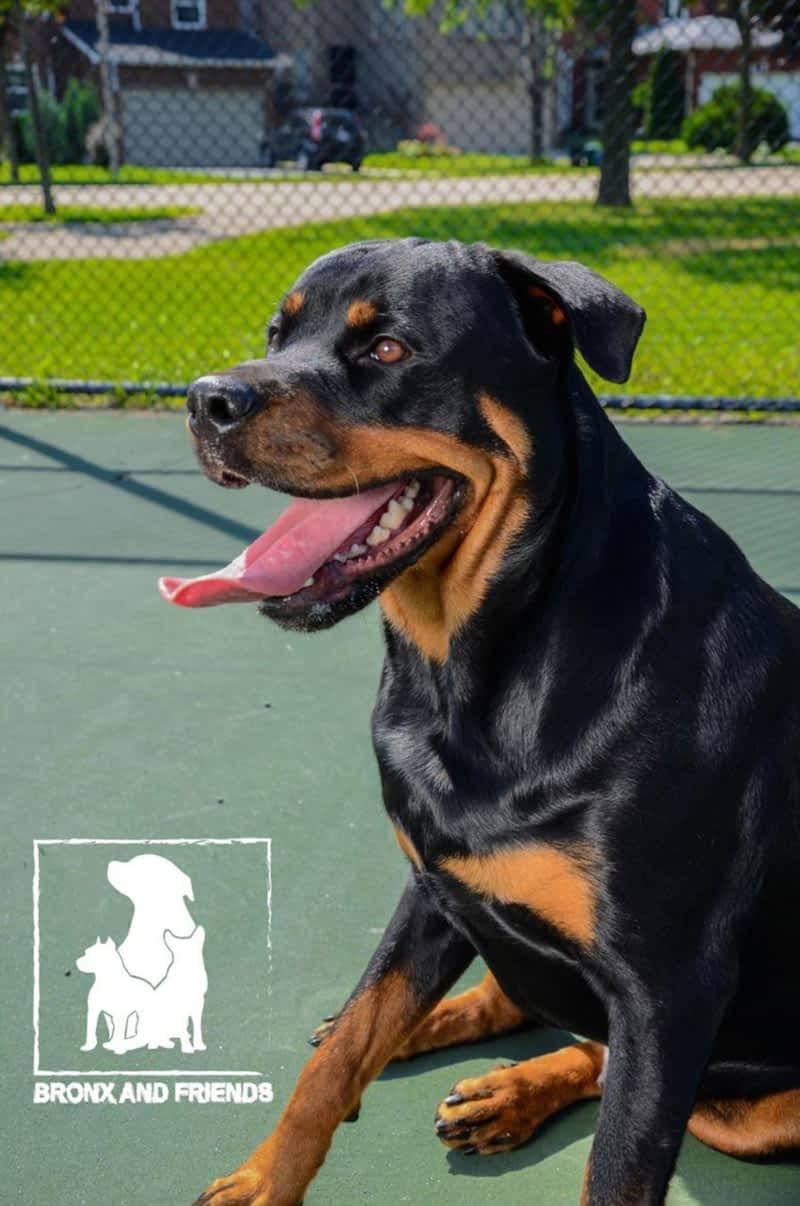 Dog Training In The Bronx