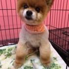 View Salon De Toilettage Passion Canine's Rosemère profile