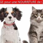 Kaviar International Inc - Toilettage et tonte d'animaux domestiques