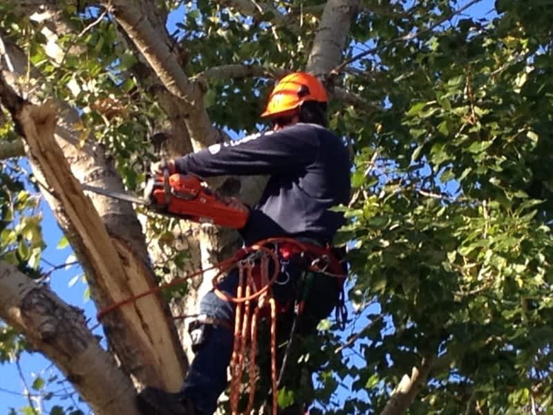 photo Resident Tree Service