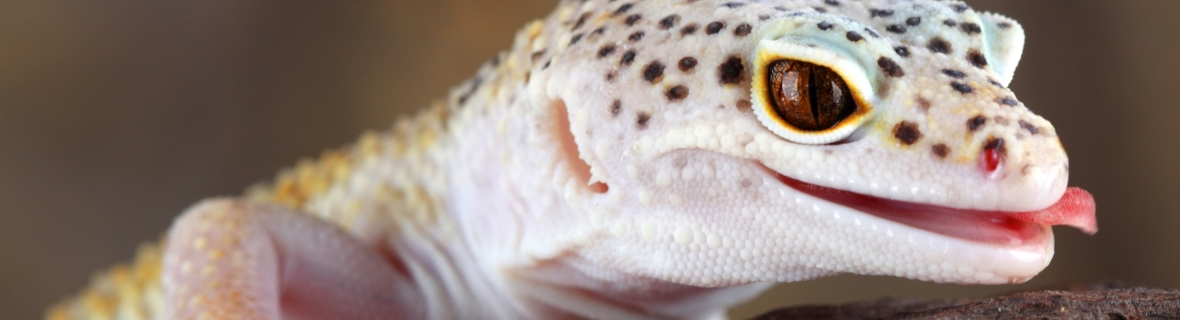 Where to get food for exotic pets in Montreal