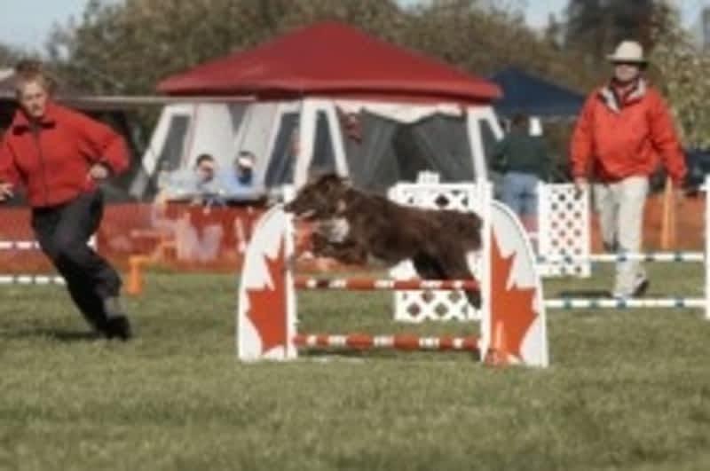 Dog Training Riverside Ca
