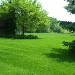 Kendall Lawn Care - Opening Hours - 2 Thomasfield Dr, Guelph, ON
