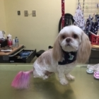Studio Belle Bête - Pet Grooming, Clipping & Washing - 819-243-1118