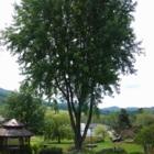 Canopée - Services d'arboriculture - Louis - Tree Service - 450-558-1126
