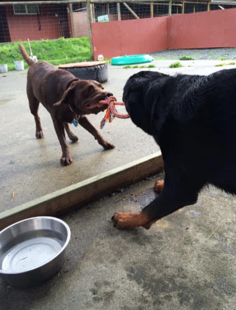 Dog Kennels Duncan Bc