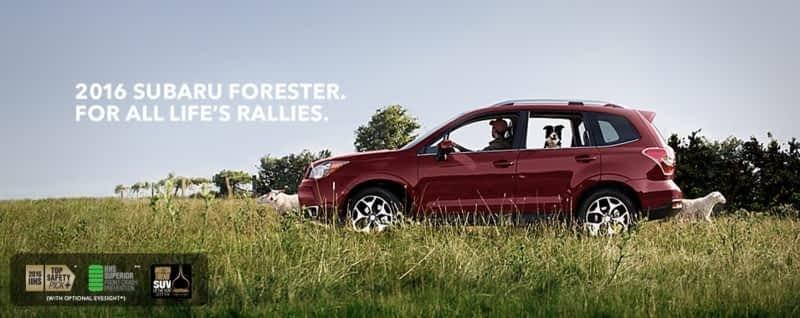 Whitehorse Subaru Car Rental