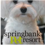 Springbank Pet Resort - Pet Care Services - 403-217-7387