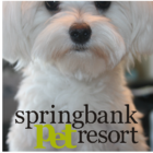 Springbank Pet Resort - Kennels